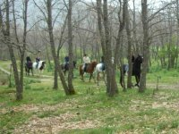 Horseback among the trees