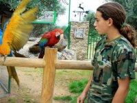 Aves paradisiacas