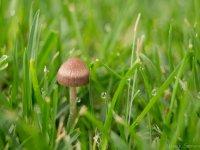 Hongo entre la hierba