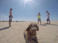 与狗在沙滩上
