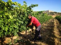 visitando la bodega y los viñedos