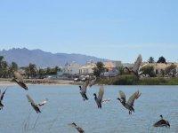 Uccelli della zona