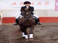 Evento niño con caballo