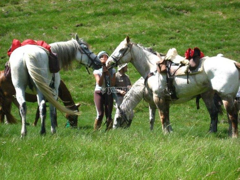 Disfrutando de los caballos