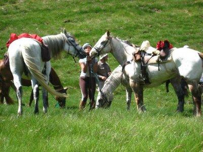 Excursión a caballo, de medio día, en el Montseny