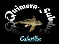 Club de buceo Quimerasub