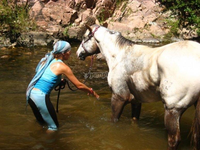 Dando de beber al caballo