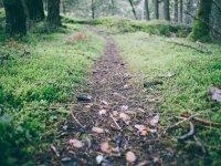 Camino andado