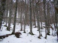 Zona de bosque