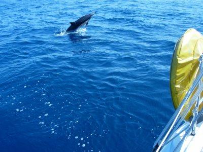 Lastres Vela Avistamiento de Cetáceos