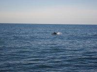 Delfines en Lastres