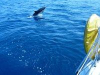 Delfín desde la popa