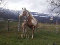 Potrillo junto a su madre