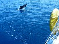 Delfín en popa
