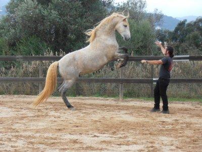 Troya Horse Tamers