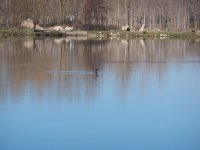 somormujo on the lake