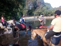 Horses in the swamp with their riders