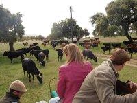 Avanzando entre el ganado