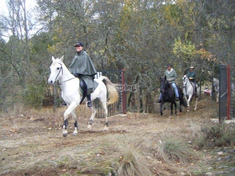 Horse riding routes