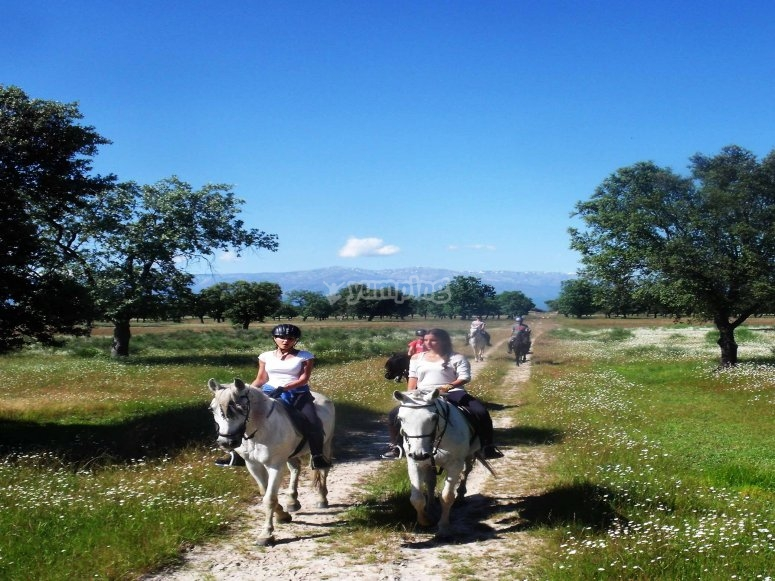 Horse riding trips