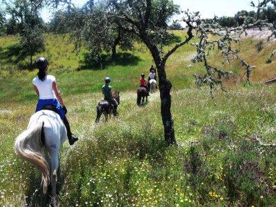 2小时在纳瓦尔莫拉尔德拉马塔骑马