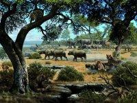 Zona safaris