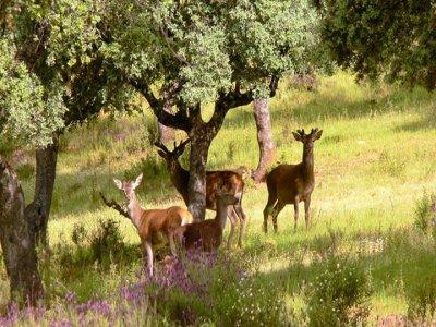 Quercus Route Senderismo