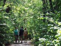 senderismo en el bosque