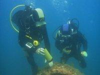 分析接近鲨鱼水下潜水种类