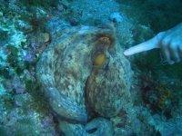 采用下沉仍符合海洋生物