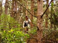 通过森林定位的事业