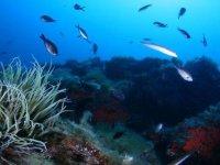descubre las bellezas del mar
