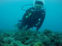 nadando entre corales