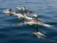 海豚发现一个奇妙的世界