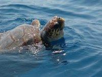 La mejor fauna marina