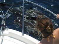 最好的海洋生物能得到触摸与您的家人来