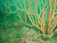 admira los corales