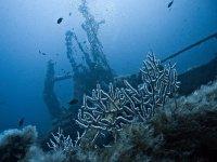 descubre los secretos del mar