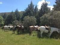 Horseback excursions in Huesca