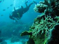 Buceador junto a la vida submarina