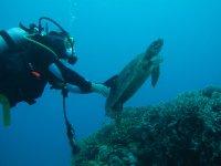 Buceando junto a tortugas