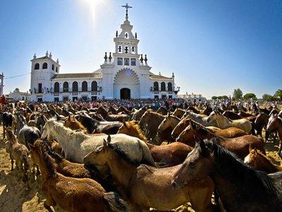 Horses in Spain Visitas Guiadas