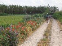 Walking through the countryside