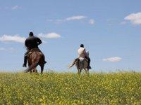 Paseando por el campo con los caballos