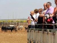 Visitando la finca de ganado