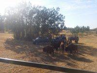 15人,VIP路4×4的Safari伊比利亚
