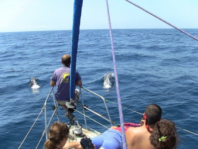 Alquiler de veleros Argosailing Avistamiento de Cetáceos