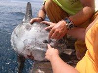Examinando al pez