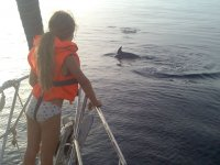 Pequena奥卡观看海豚进行测量-999