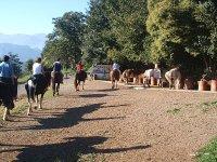 Inizia la strada con i cavalli